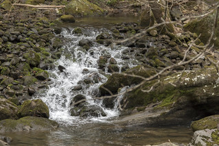 Spring on Big Creek, South Cumberland State Park, Grundy County, Tennessee 1