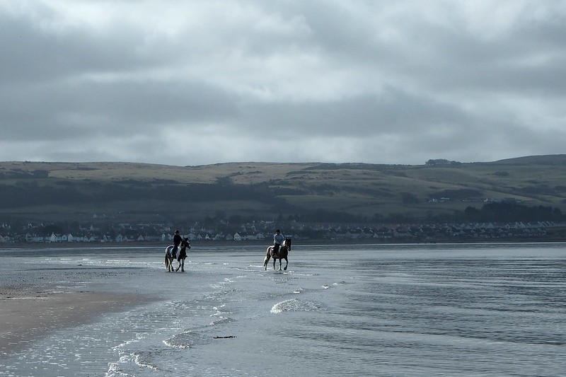 Ponies on the beach at Ayr