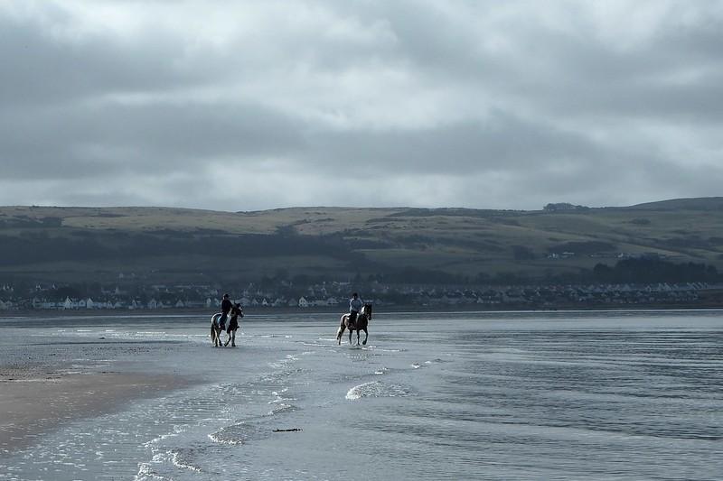 Ponies on the beach at Ayr