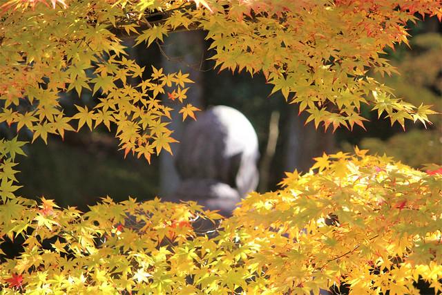 imakumanokannonji-koyo021
