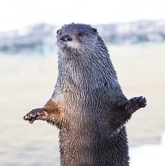 Where's My Dinner?