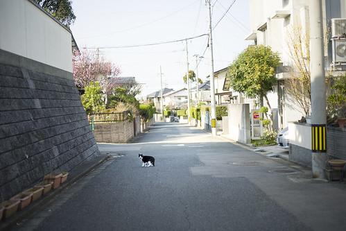 JB C3 14 020 福岡市東区 LEICA SL × Canon EF 50mm F1.8 STM#