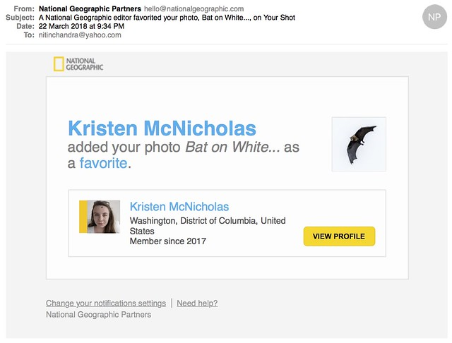 A National Geographic editor favorited your photo Bat on White on Your Shot