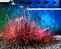Yucca & blue adobe