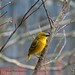 <p><a href=&quot;http://www.flickr.com/people/tim0854/&quot;>{House} Photography</a> posted a photo:</p>&#xA;&#xA;<p><a href=&quot;http://www.flickr.com/photos/tim0854/39135198440/&quot; title=&quot;Village Weaver&quot;><img src=&quot;http://farm5.staticflickr.com/4775/39135198440_f4639af639_m.jpg&quot; width=&quot;240&quot; height=&quot;160&quot; alt=&quot;Village Weaver&quot; /></a></p>&#xA;&#xA;