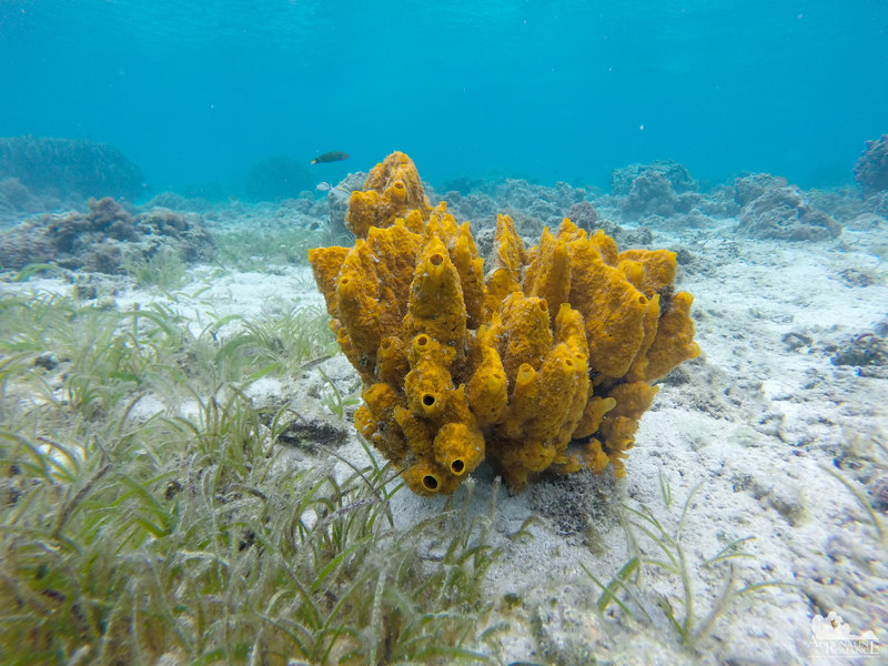 Sponge at Digyo Island Marine Sanctuary