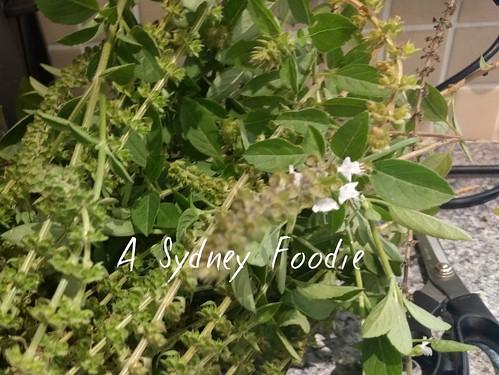 Perennial basil