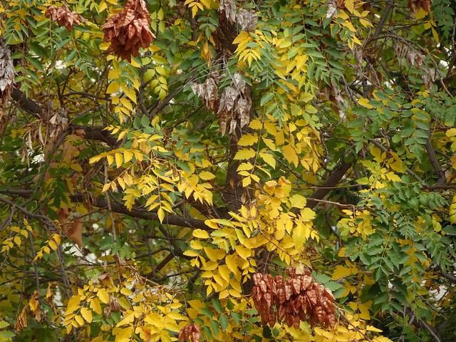 Hojas y más hojas