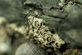 20170331-13_Barnacles on the Rocks - DoF