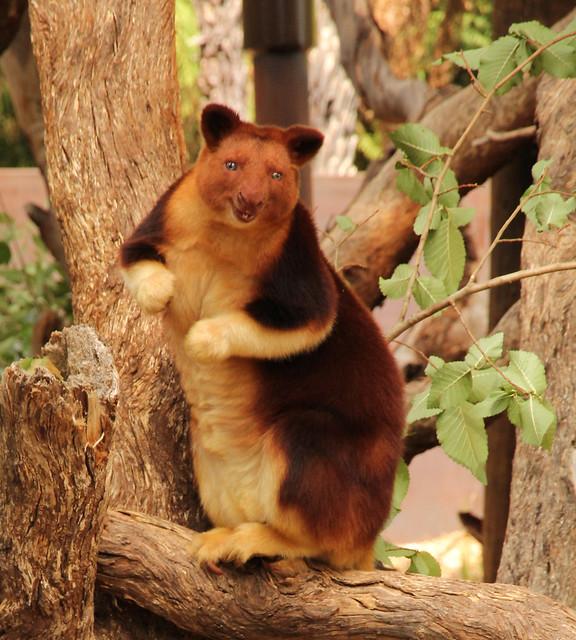 10 poze superbe din lume 10 fotografii frumoase din diferite locuri ale lumii cristi milla blog personal 10 peisaje superbe din lume poze cu animale foarte frumoase flickr 2018 Tree Kangaroo miercurea fara cuvinte carmen