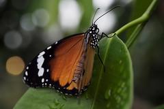 Papillons en Liberté 2018 - Photo 17