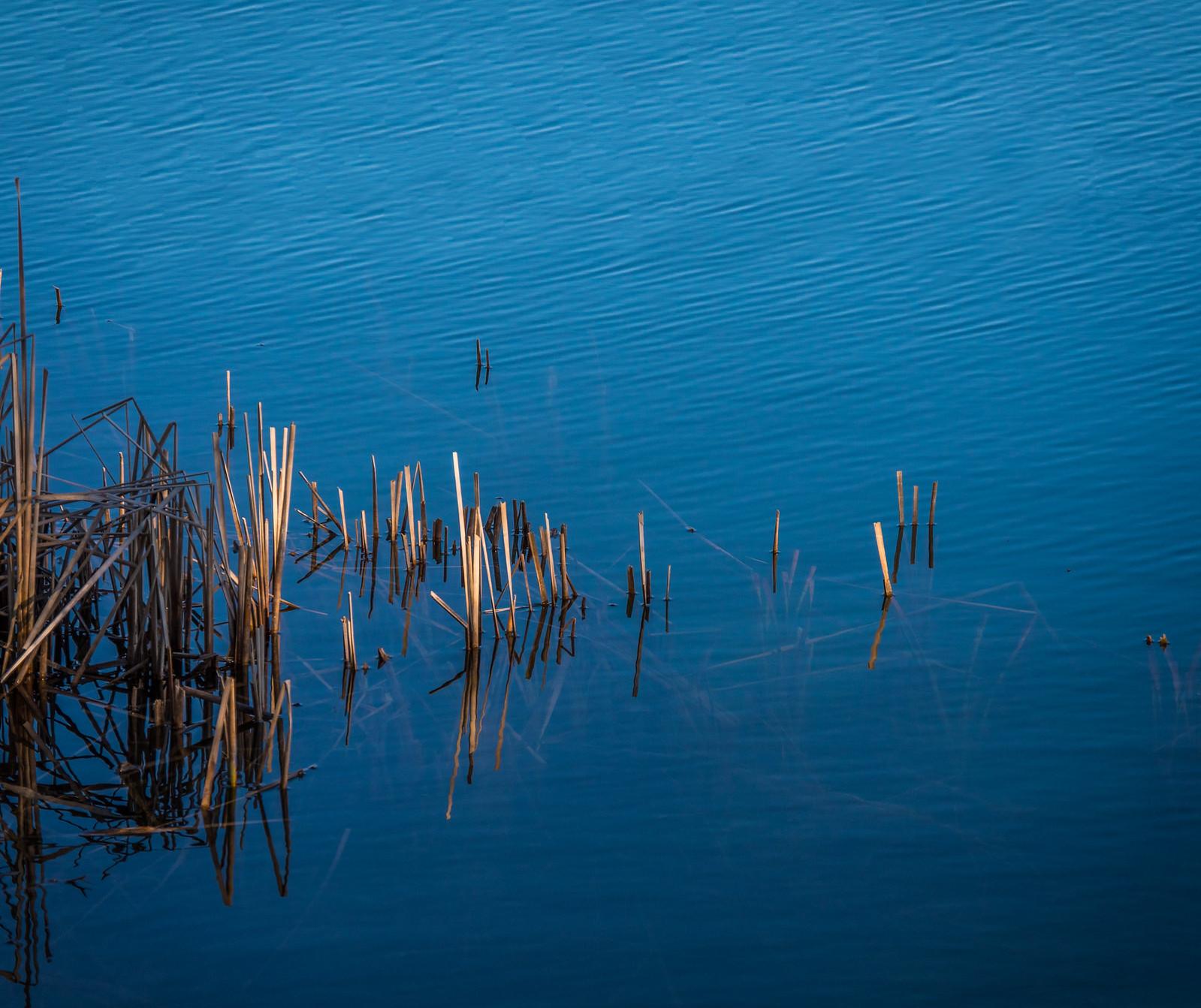 Au bord de l'onde bleue...+ autres recadrages... 40905948681_759634b0c5_h