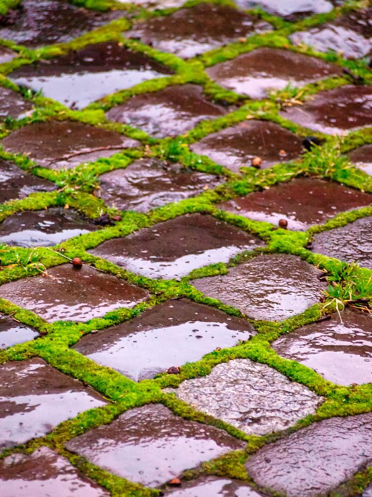 Cobblestone and moss