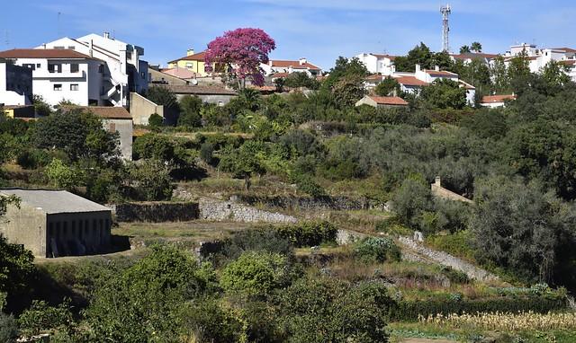 Blick auf Monchique, Algarve - von Fern leuchtet ein Florettseidenbaum (Ceiba speziosa) (14)