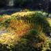 The beauty of moss by PTMurphus