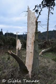 Harz nach Sturmtief Frideriecke