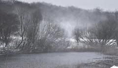 Winterspaziergang - Am Teich auf der Weide; Bergenhusen, Stapelholm (23)