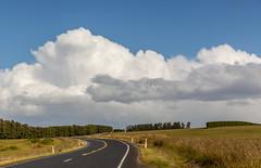 Road in Otago