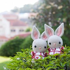 Ichigo San Bunny Amigurumi