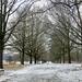 Tree Path Snow