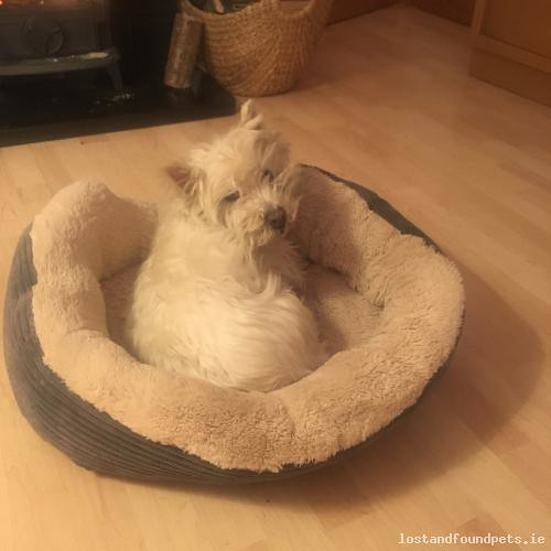 [Reunited Via Other Site] Tue, Mar 13th, 2018 Lost Male Dog - Hawthorn Drive, Portlaoise, Laois