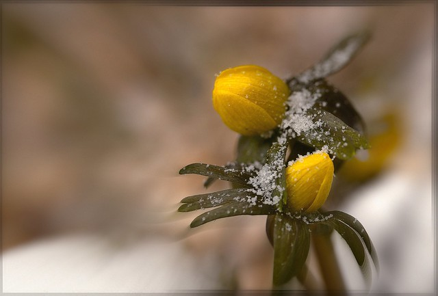 Brrr weer winter
