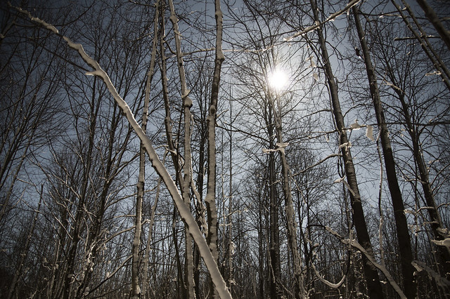 March 3 -  Fowler Woods State Nature Preserve