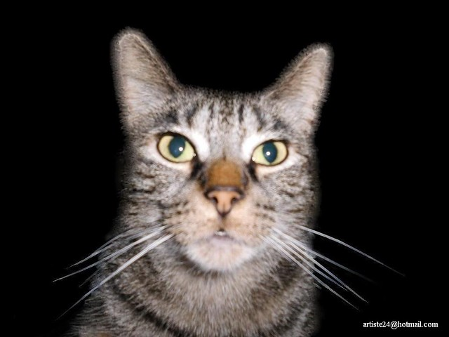 Minus Cat (1)
