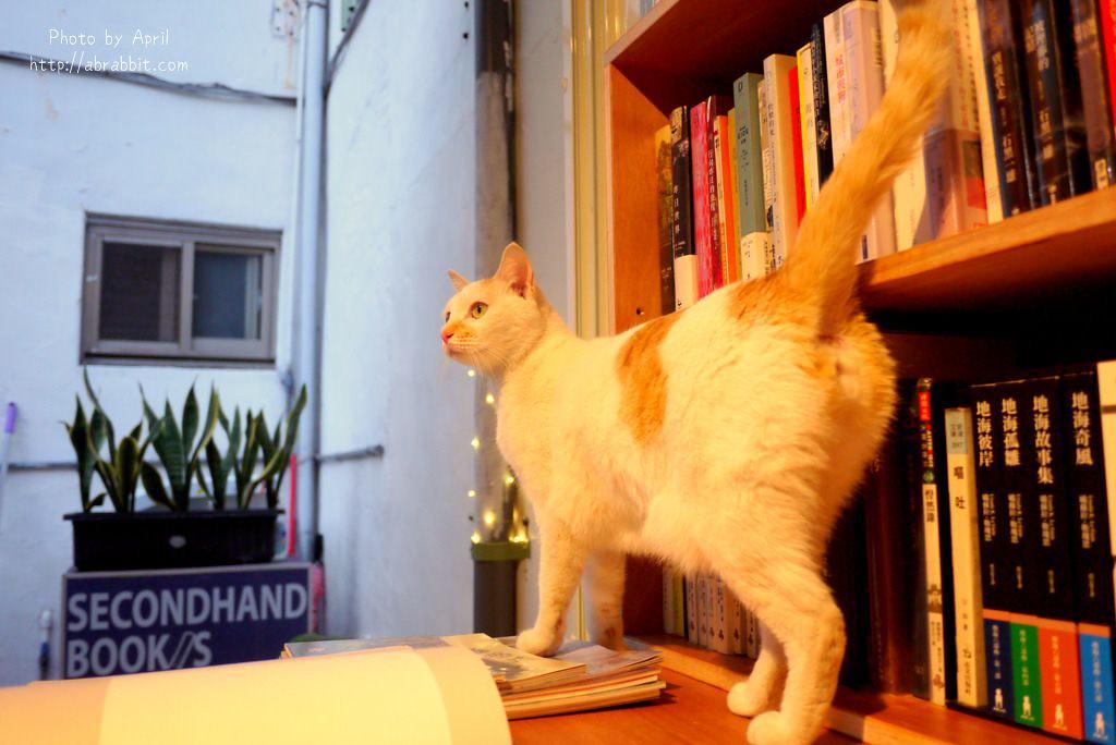 26918843498 6e03a7d95d b - 台中獨立書店|梓書房-二手書、咖啡,和貓咪一起看書吧!