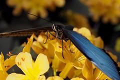 Papillons en Liberté 2018 - Photo 18