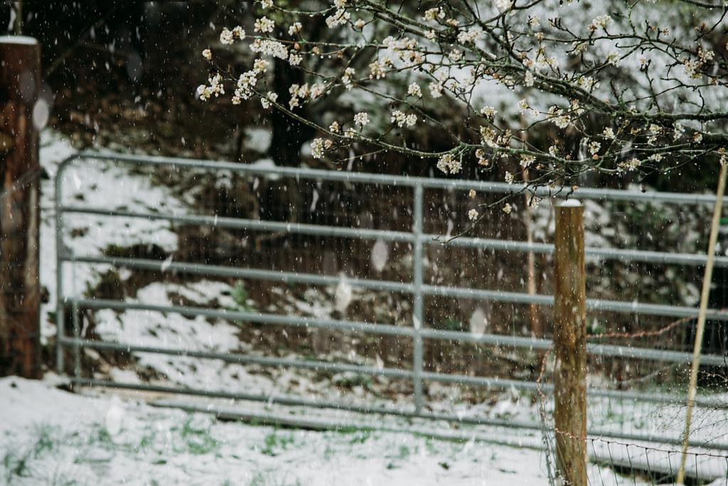 snowsnow03242018-0854032418