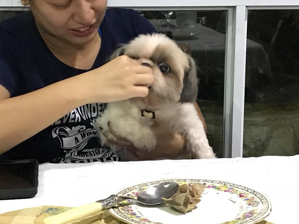 Spoled dog,  shih tzu Stitch