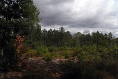 20120913 17 105 Jakobus Wald Wolken - Photo of Lias
