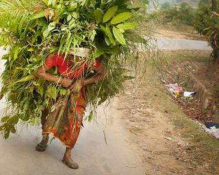 Nepal - Bandipur