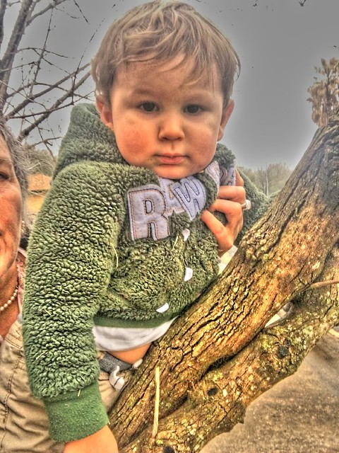 HDR grandson: tree climb
