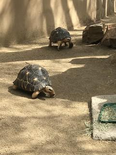 San Diego Zoo 3/23/2018
