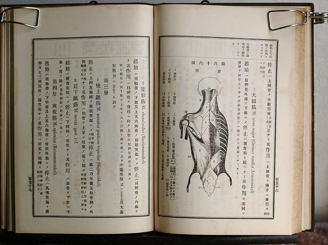 今田束『實用解剖學』卷一 明治33年十一版(後半)
