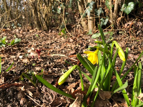 Surely Spring can't be far away...