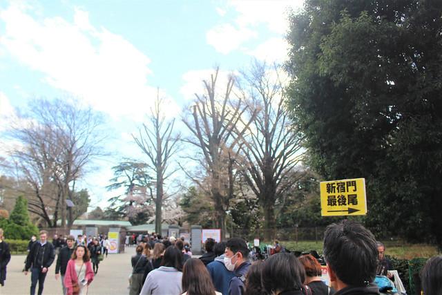 shinjukugyoen-sakura0323002