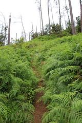 Madeira 2016 - 15.Tag, Levada do Castelejo, Penha D`Aguia, Eagle Rock, Adlerfelsen