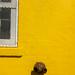 Yellow Wall 2