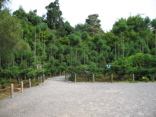 Kitayama cedar trees, Ryoanji Temple, Kyoto