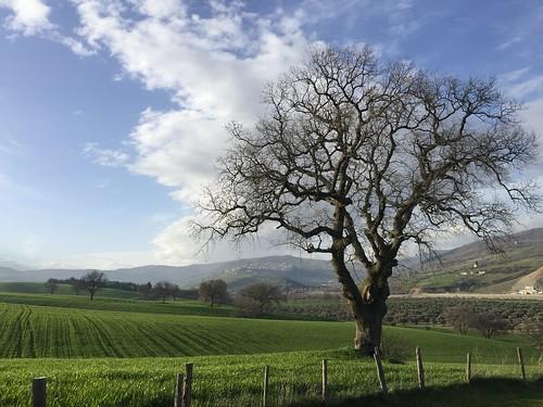 Lucaniashire