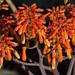 orange blossom express by E>mar
