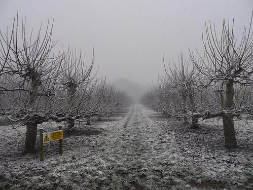 Kentish Orchards