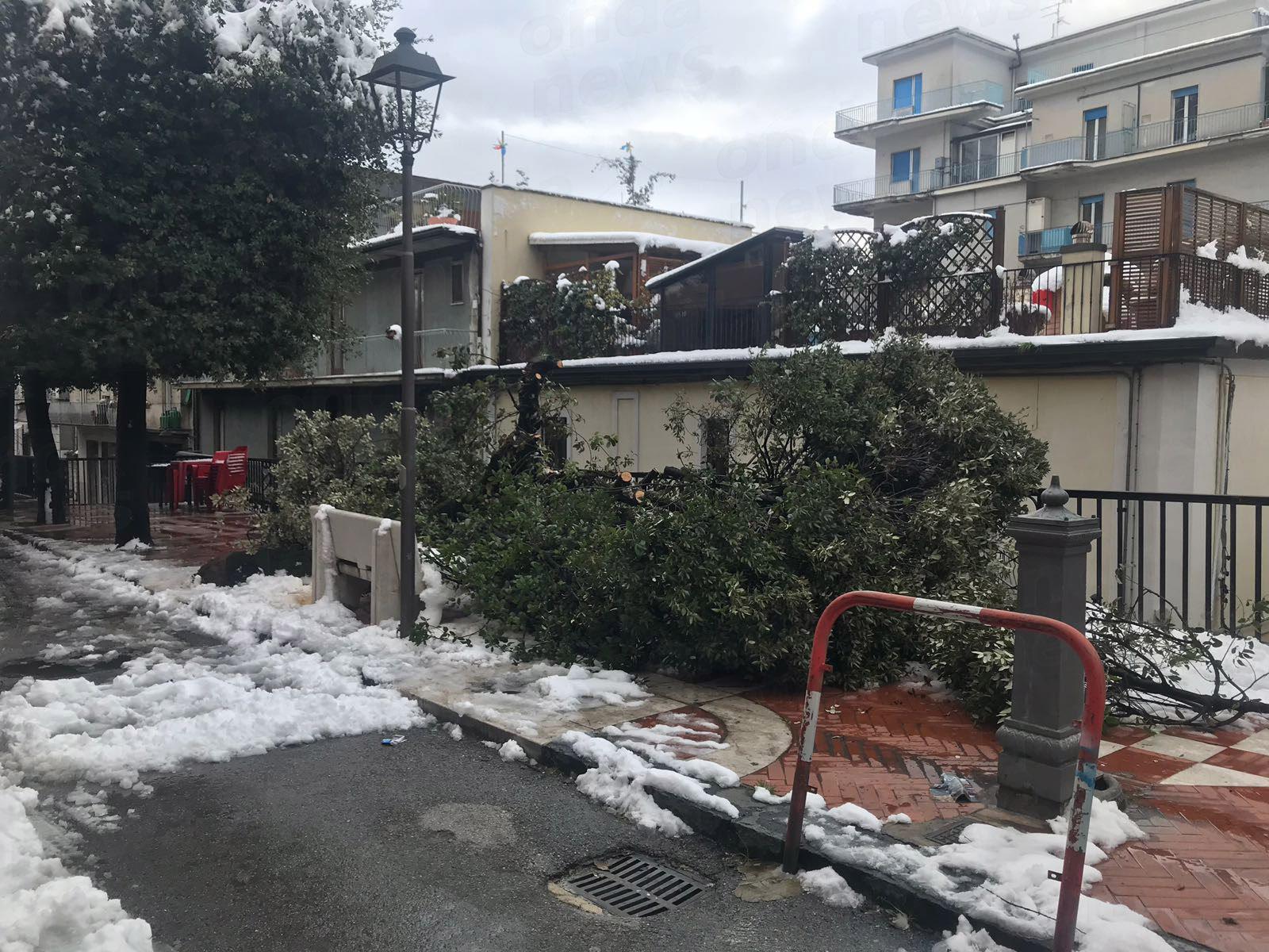 albero sala caduto