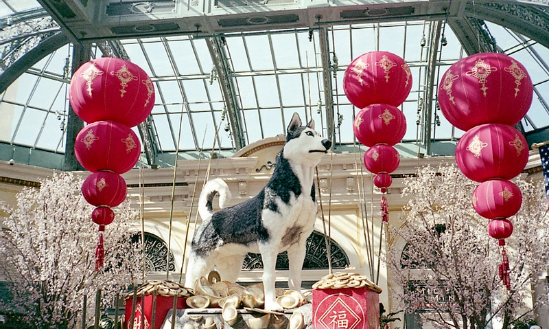 Bellagio Botanical Garden: Year of the Dog II