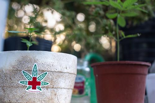 Cultivando_nuestra_Salud_23