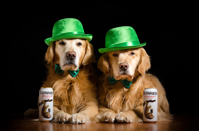 Irish Dogs? 11/52