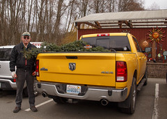 My truck comes in handy for Steve's new tree